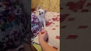 Когда твоя собака не пьёт))