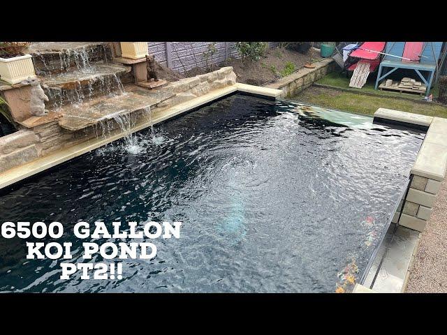 6500 Gallon Koi pond PT2!! THE FIRST KOI!!!