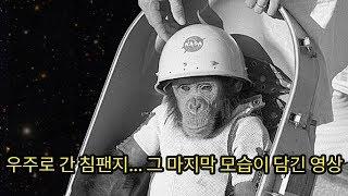혼자... 우주로 가서... 인간을 대신해 충격적인 임무를 진행한 천재 침팬지 (슬픔주의)