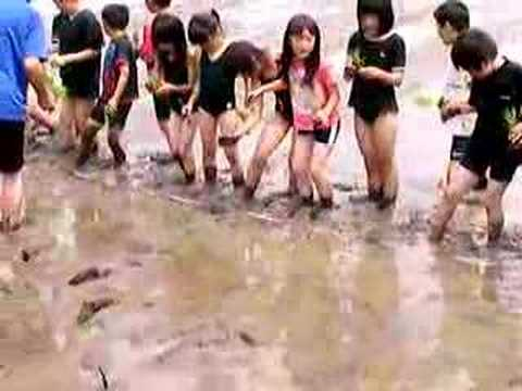女子小学生がスクール水着で田植えを体験(サブソースにあります)