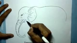 video belajar menggambar gajah