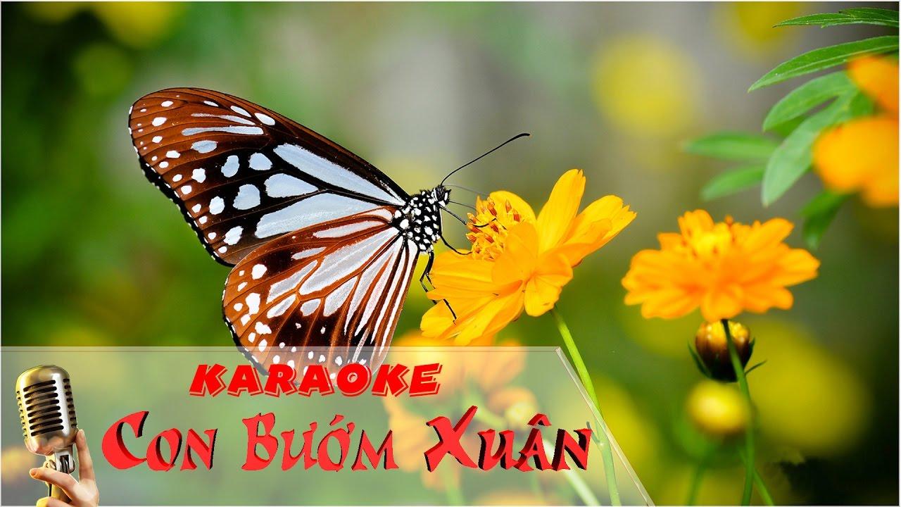 [Karaoke HD] Con Bướm Xuân - Hồ Quang Hiếu - YouTube