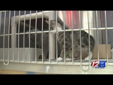 Burrillville Animal Control rescues 25 cats from hoarding situation