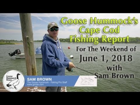 Goose Hummock Cape Cod Fishing Report 6/1/18