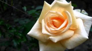 Самые лучшие клипы о любви - онлайн смотреть