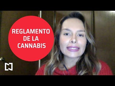 Entra en vigor reglamento de cannabis medicinal - Punto y Contrapunto