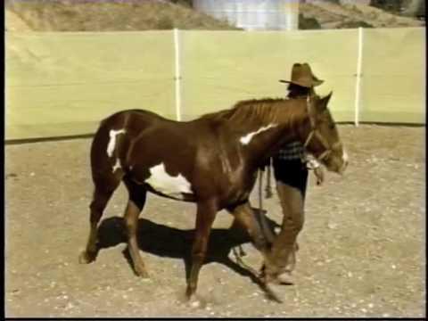 'Horse whisperer' and