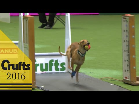 Thumbnail: Flyball - Team Final | Crufts 2016
