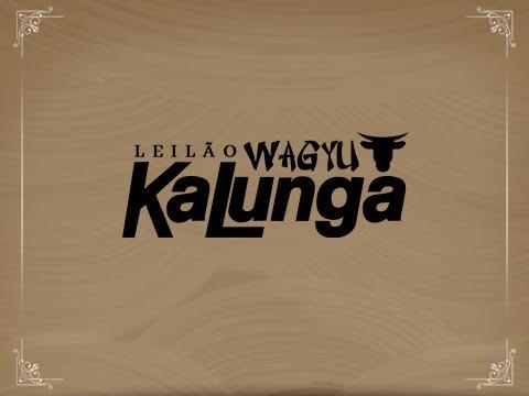 Lote 38 (Etsuko 61 Kalunga - WAGY 61)