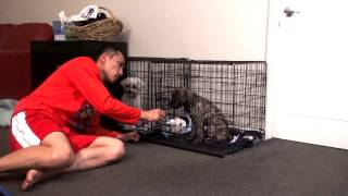 Stop puppy cry or bark in crate at night. Puppy crate training.