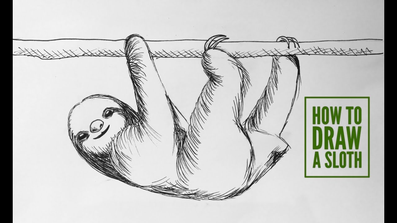 how to draw a sloth