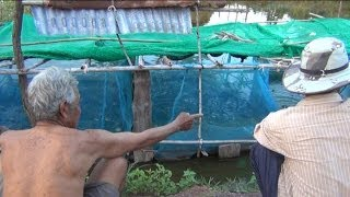 เลี้ยงกบในกระชัง แบบลอยน้ำ (ภาษาอีสาน)