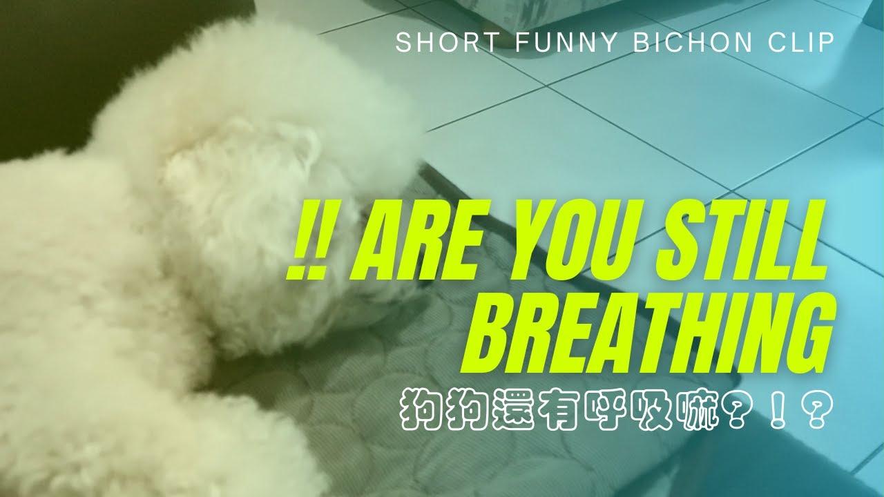 【不專業開箱】How to check if your dog is still breathing!!狗狗還有在呼吸嗎?!「跟人一樣XD」開爆它吧  EP3