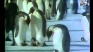 الإعجاز العلمي في حيوان البطريق للدكتور محمد راتب النابلسي