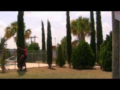 *Plant Italian Cypress Trees* +Cupressus sempervirens+Evergreen+
