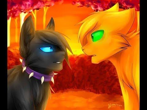 |Коты воители| клип {бич , огнезвёзд } ♡CoTo_YaNa ♡