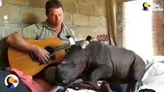 Man Plays Rescued Baby Rhino A Lullaby | The Dodo
