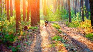 Morning Relaxing Music - Nature Sounds, Bird Sounds, Forest Music, Stress Relief, Meditation Music screenshot 2
