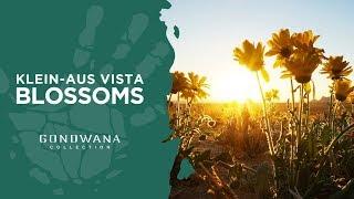 A Namibian Moment - Klein-Aus Vista Blossoms