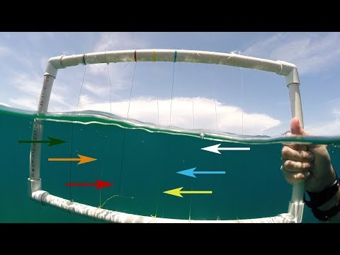 Underwater Visibility Test of Braided Fishing Lines
