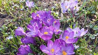 Весна С Никой в Аптекарском огороде Yoll