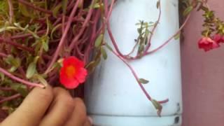 Full Roof Garden with waste Bottles II Video