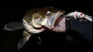 Рыбалка на Судака в Глухом Коряжнике. Вся Рыба из-под Одной Коряги!!!