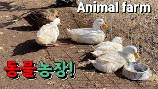 [동물농장]animal farm/동물먹이주기/ 동물먹방/켄싱턴호텔