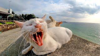 防波堤で休む白猫二人組の隣に座って撫でる