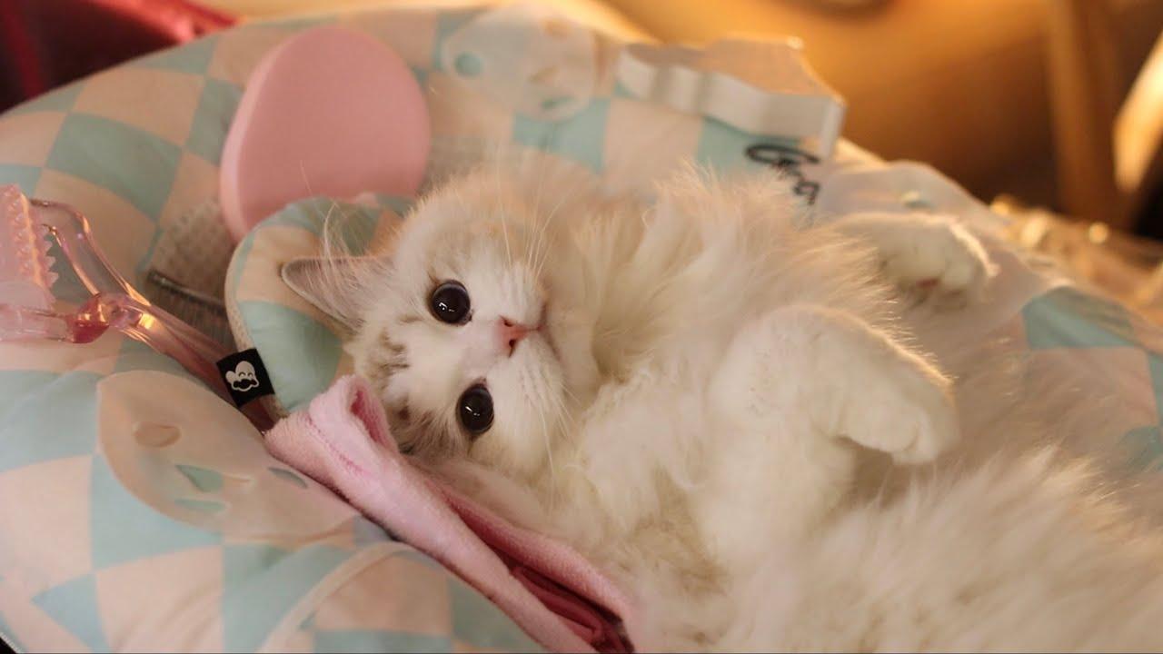 고소당하기 직전 고양이 에스테틱샵! ASMR (화나신 김떡순 고객님 달래기)