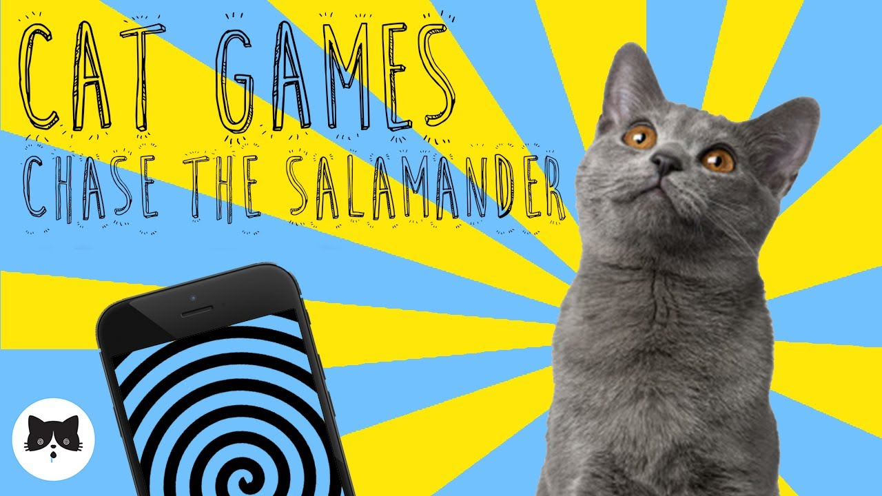 CAT GAMES - Entertaining Videos for Cats - CHASE THE SALAMANDER!