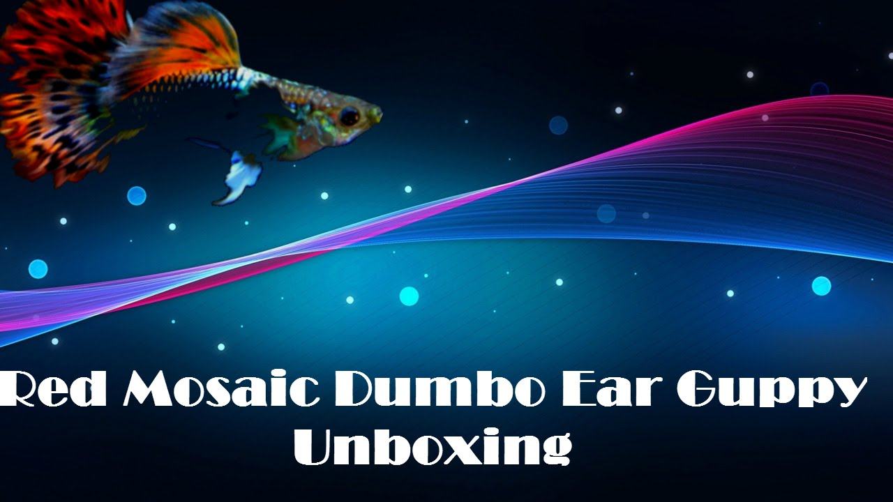Red Mosaic Dumbo Ear Guppy Unboxing