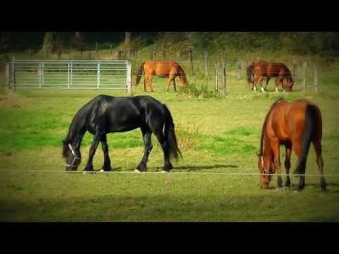Pferde Song:Das rote Pferd