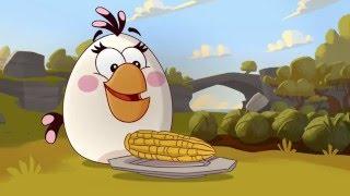 Злые птички - Энгри Бердс - Кукурузный конфликт (S1E37) || Angry Birds Toons