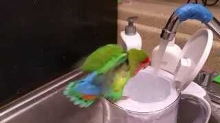 TLA birds take baths in the kitchen