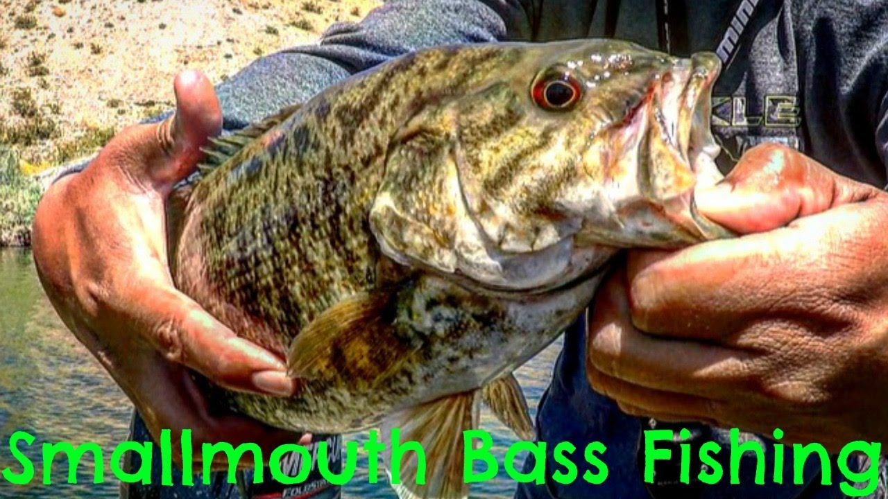 Amazing smallmouth bass fishing in ultra clear water for Lake mohave fishing report