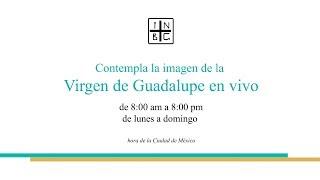 Virgen de Guadalupe en vivo