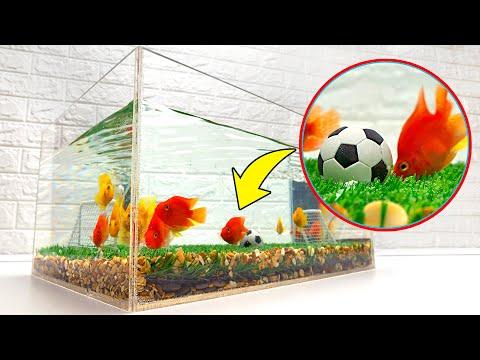 Football For Fish! DIY Aquarium