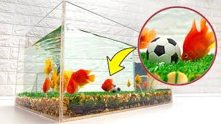 Can Fish Play Football? Fun DIY Aquarium