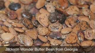 Georgia's Lost Beans Part I Butter Beans And Lima Beans By Doc Bill And Cornelia