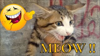 I Feeding Stray Kittens (Cute Kittens- Cat Food)