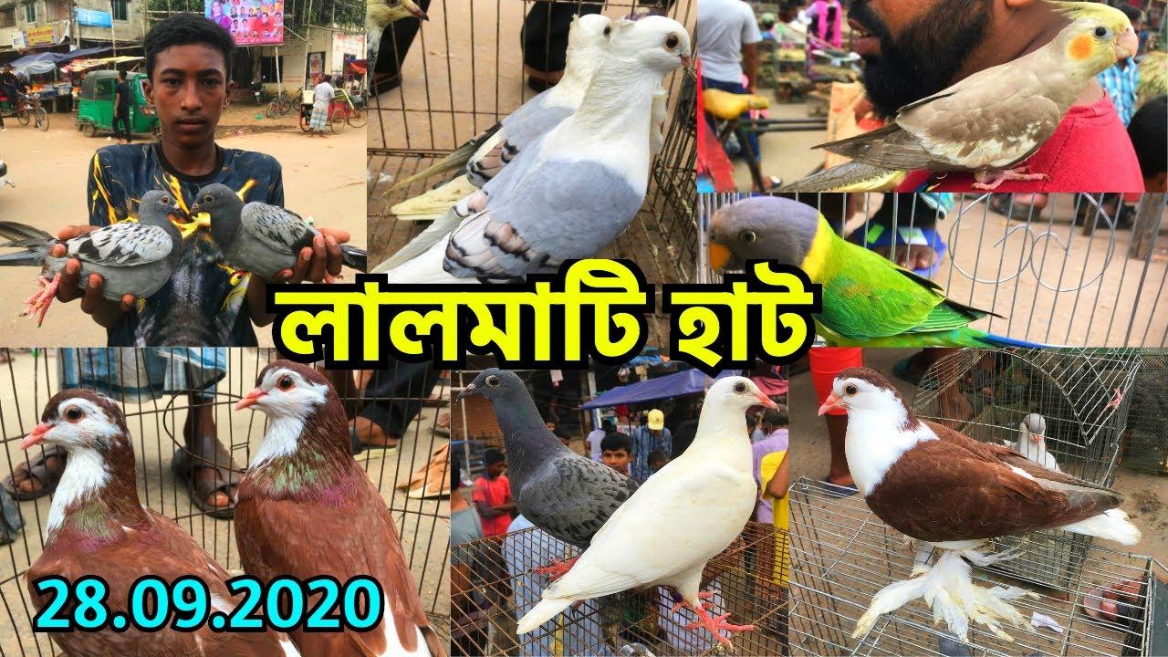 লালমাটি হাট থেকে পাখি ও কবুতরের দাম জানুন | মিরপুর - ১১ হাট | সোমবার || Lalmati Pet Market (V - 156)