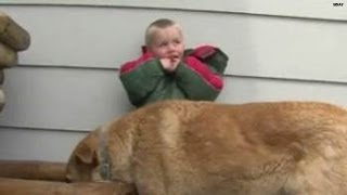 Watch: Dog protects lost 3-year-old