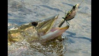 Фото и Видео зарисовки с рыбалок. Fishing. Поклевки карася, карпа, судака, атака щуки