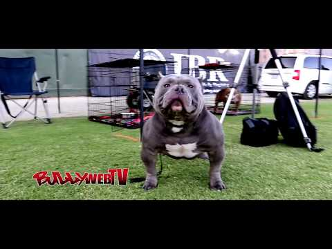 AMERICAN BULLY BY THE NAME OF