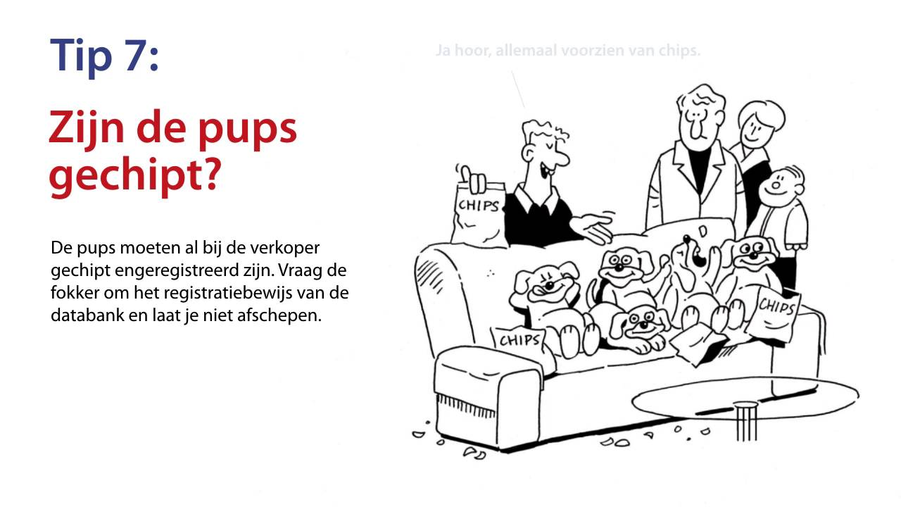 Whiteboard Kopen Action Whiteboard Animatie Kopen Puppies Art Unit
