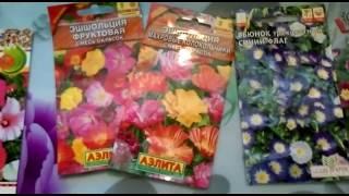 Неприхотливые однолетники!! Майские посевы. Эти цветы может вырастить каждый...