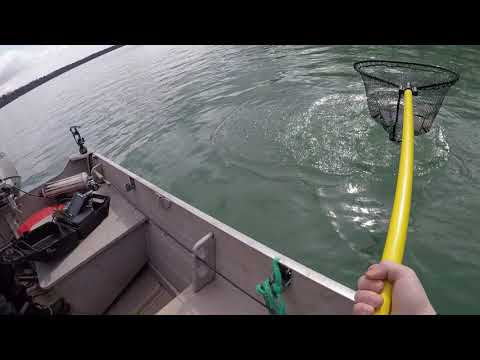 Jigging Trout Niagara River