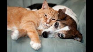 Приколы с Котами.   Смешные  кошки 2018. Приколы с животными и детьми.