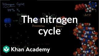 Nitrogen Cycle Ecology Khan Academy